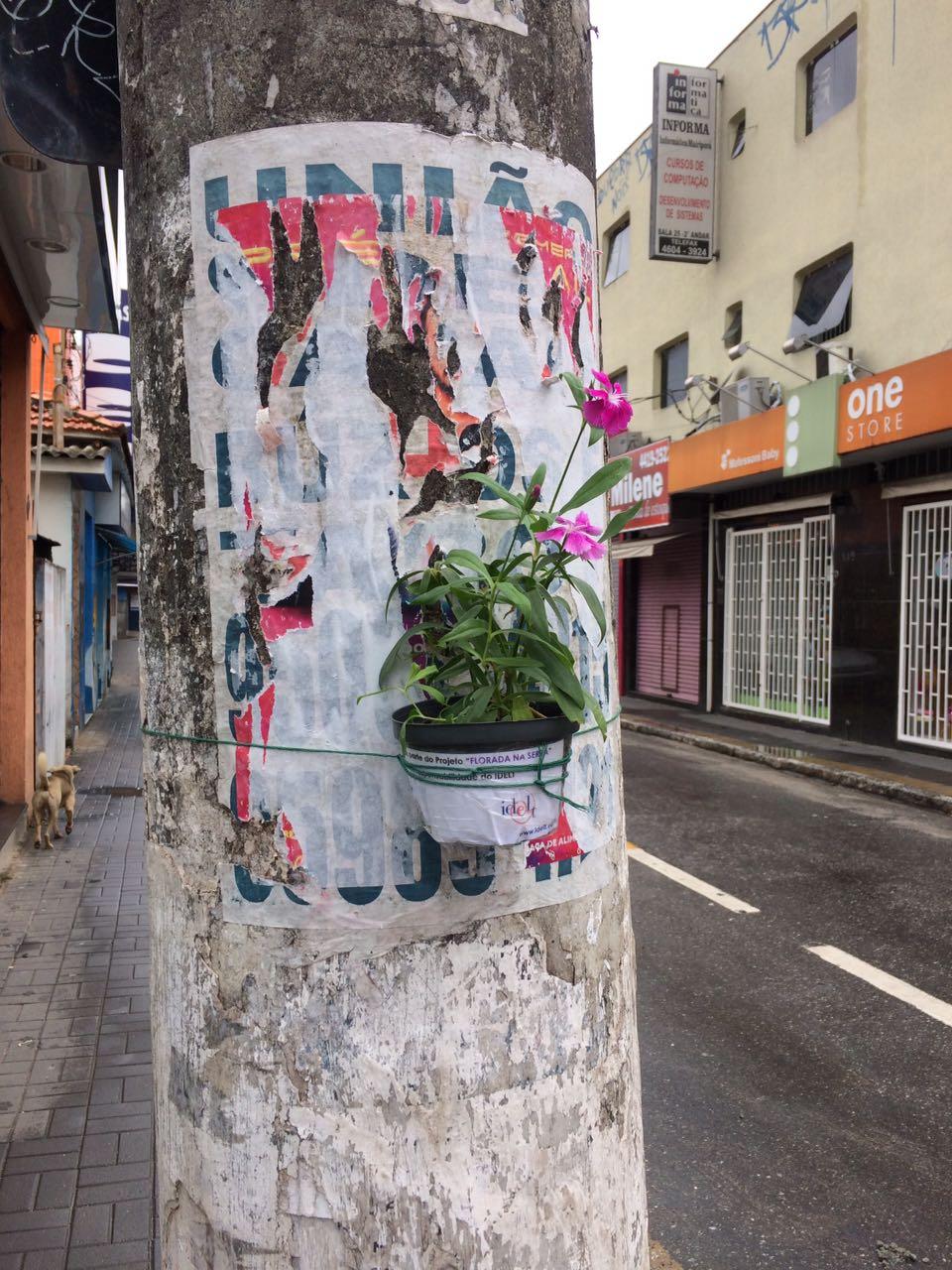 Floreiras Mairipora 01-17 (11)