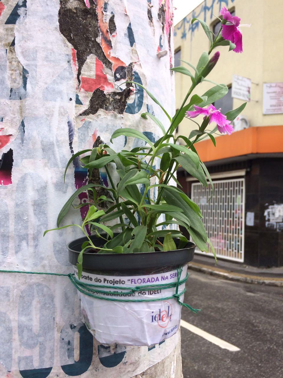 Floreiras Mairipora 01-17 (14)