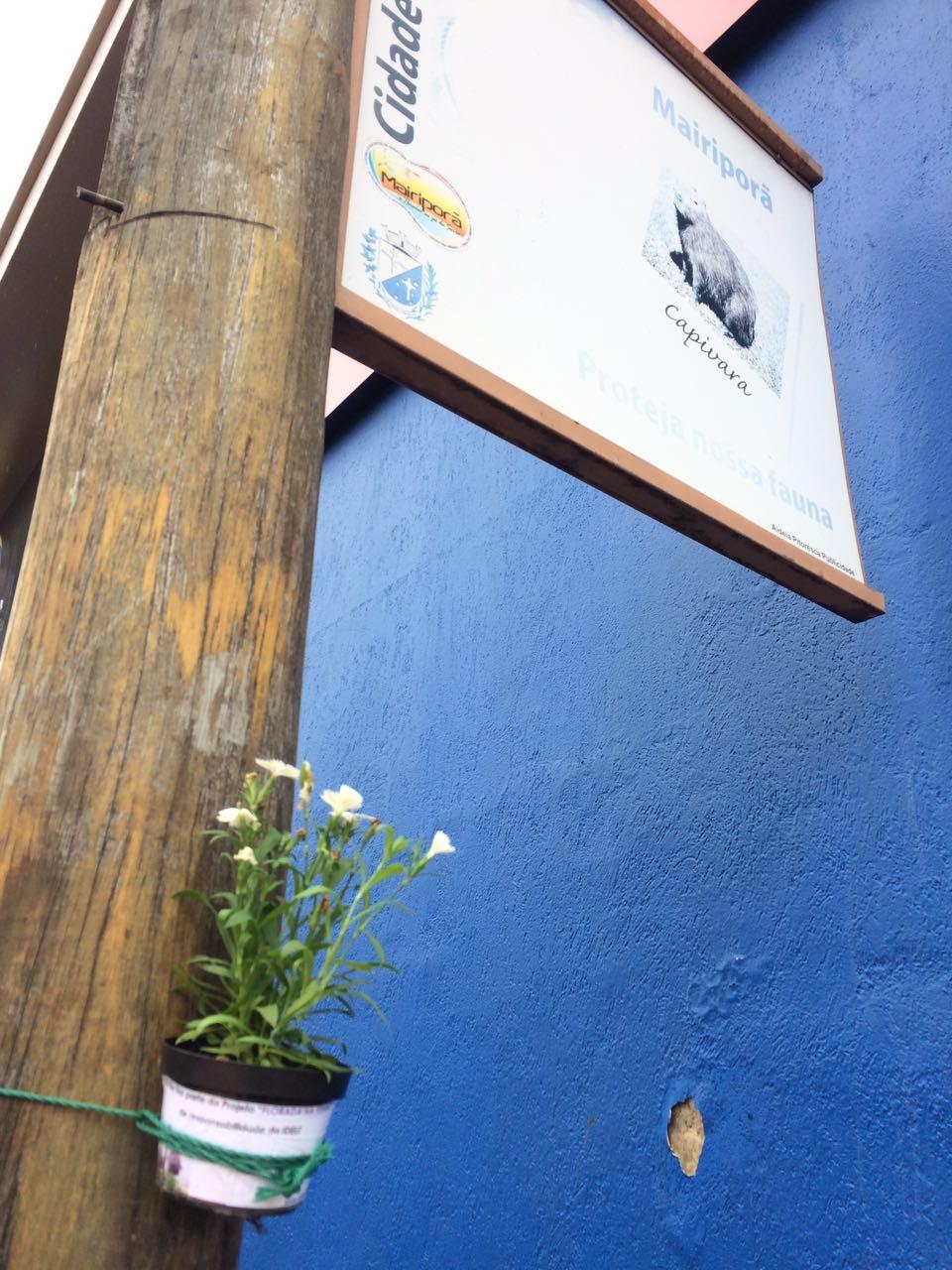 Floreiras Mairipora 01-17 (19)