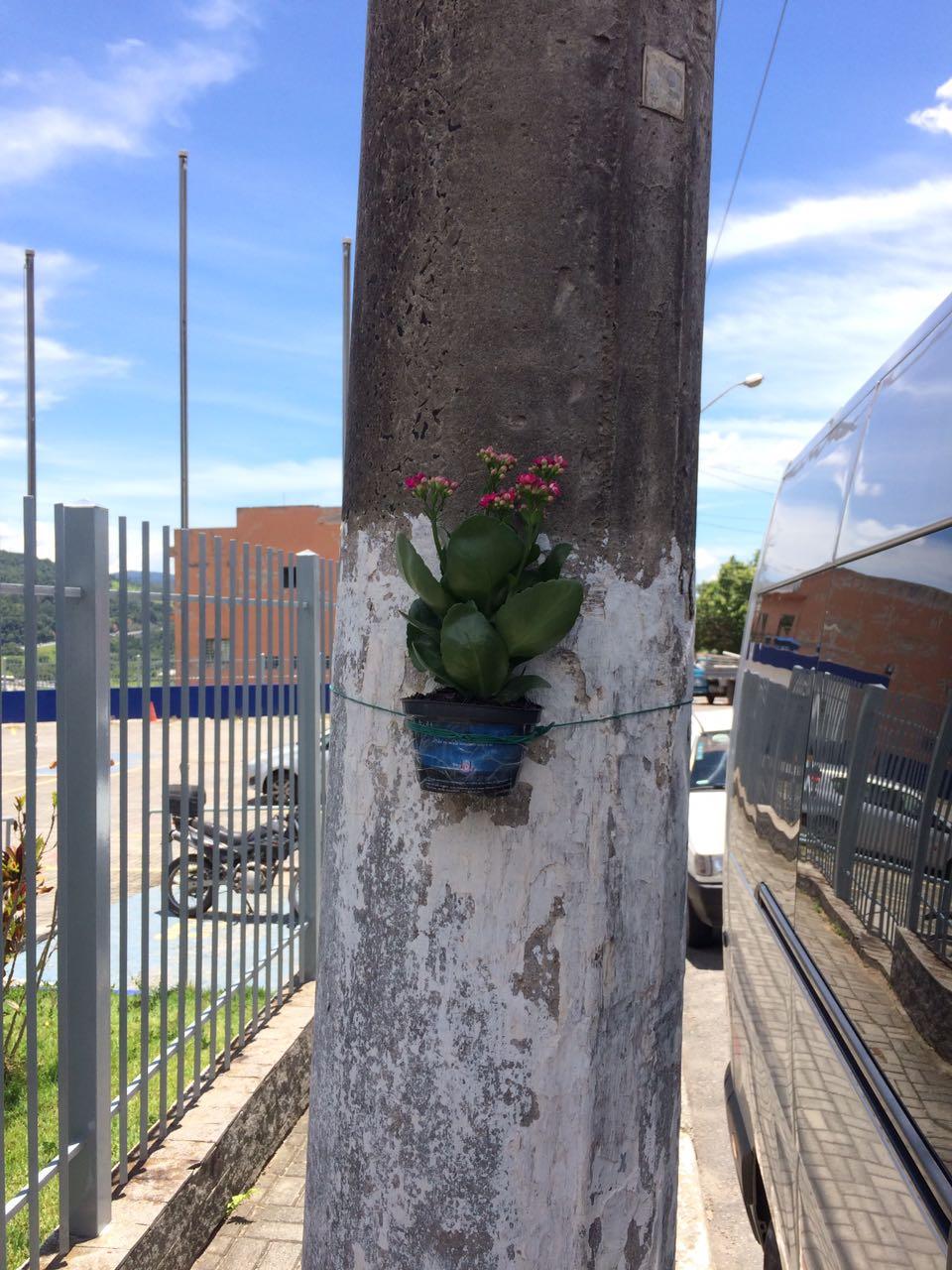 Floreiras Mairipora 01-17 (2)