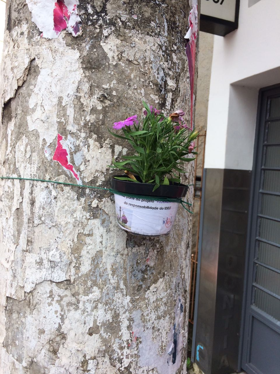 Floreiras Mairipora 01-17 (5)